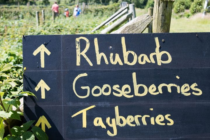a hand written farm sign posted with arrows for rhubarb, gooseberries and tayberries