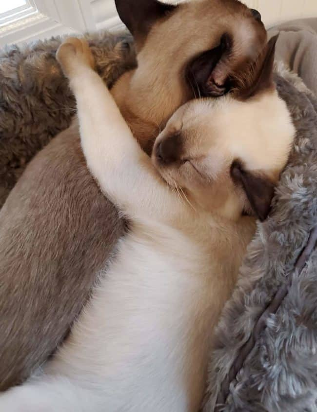 two sleeping kittens hugging