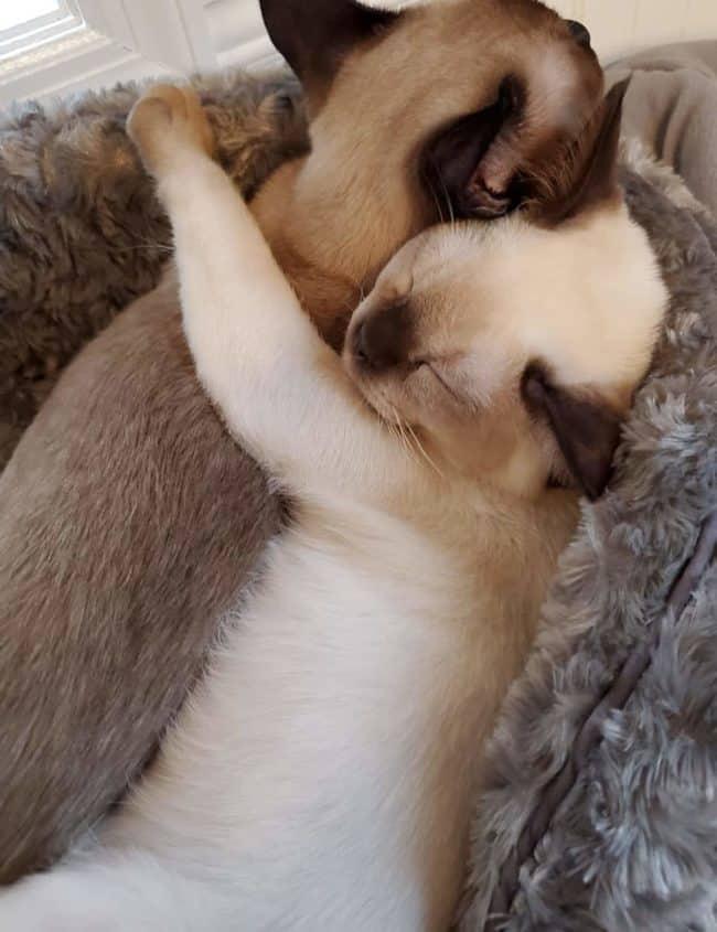 two sleeping kittens hugging