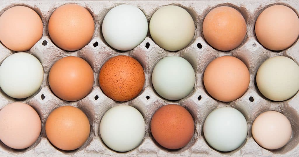 Assortment of different color, fresh, chicken eggs in a gray tray